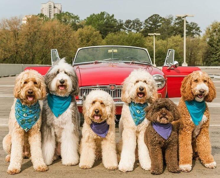 blog 1 - Roupas para pets e para seus donos