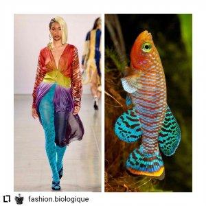 a1b84a66 9575 49f6 b2d7 bb749aefd885 300x300 - Estampas: A moda imita a natureza